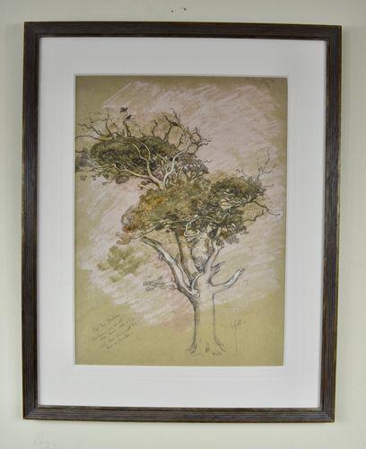 William Shackleton - Oak Tree, Parham - watercolour