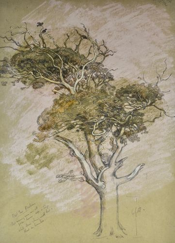 William Shackleton - Oak Tree, Parham - watercolour