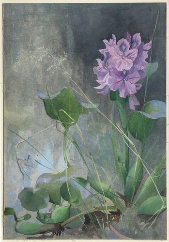 Arthur Wardle - Water Hyacinth - watercolour