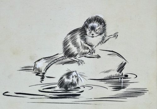 Eileen Soper - Water Voles - pencil