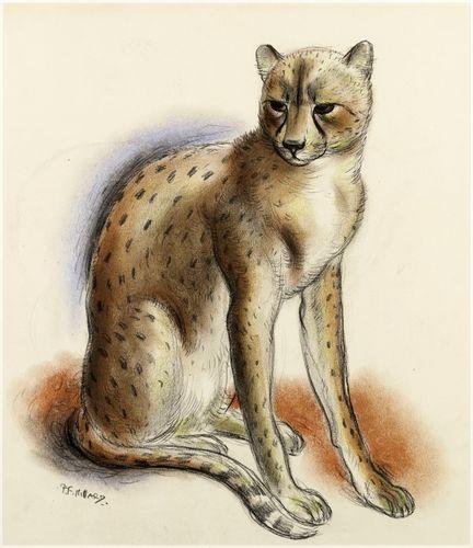 Patrick Ferguson Millard - Cheeta - Chalk drawing