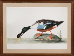 18th century watercolour