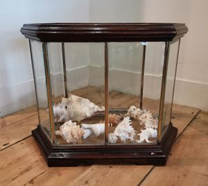 Edwardian display case