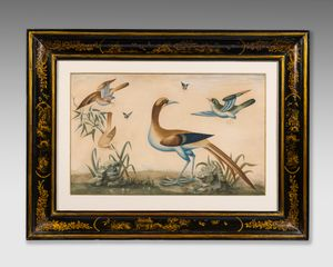 18th century gouache study of birds